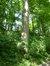 Chêne pédonculé – Woluwé-Saint-Pierre, Parc Parmentier –  03 Juin 2014