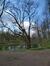 Tilleul argenté pleureur – Woluwé-Saint-Pierre, Parc Parmentier –  13 Avril 2021