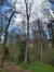 Tilia platyphyllos 'Laciniata' – Woluwé-Saint-Pierre, Parc Parmentier –  13 Avril 2021