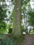 Erable sycomore – Bruxelles, Parc public de Laeken –  03 Octobre 2014
