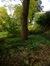 Paulownia impérial – Ixelles, Parc Tenbosch –  27 Octobre 2014
