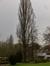 Peuplier d'Italie – Molenbeek-Saint-Jean, Parc Marie José –  05 Février 2015