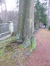 Quercus sp – Watermaal-Bosvoorde, Begraafplaats van Watermael-Bosvoorde, Buksboomstraat, 57 –  15 December 2015