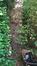 Platane à feuille d'érable – Woluwé-Saint-Pierre, Bovenberg, 118 –  12 Octobre 2015