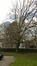 Gewone haagbeuk – Brussel, Omgeving van het Koninklijk Belgisch instituut voor natuurwetenschappen, Vautierstraat –  01 April 2016