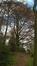 Hêtre pourpre – Forest, Parc Duden –  15 Avril 2016