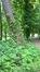 Châtaignier – Uccle, Parc de Wolvendael –  25 Mai 2016