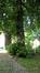 Tilleul argenté – Forest, Parc Jacques Brel –  15 Juin 2016