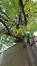 Prunus cerasifera – Etterbeek, Avenue de l'Armée, 110 –  13 Octobre 2016