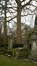 Platane à feuille d'érable – Evere, Cimetière de Bruxelles –  06 Février 2017
