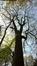 Frêne commun – Uccle, Domaine Latour de Freins, Rue Engeland, 555 –  20 Avril 2017