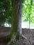 Marronnier commun – Schaerbeek, Parc Josaphat, Avenue des Azalées –  11 Mai 2017