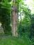 Robinier faux-acacia – Berchem-Sainte-Agathe, Rue de Dilbeek, 454 –  16 Mai 2017