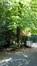 Tilleul à larges feuilles – Uccle, Avenue des Sorbiers, 5b –  26 Avril 2018