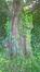 Cerisier du Japon – Uccle, Jardin de la villa Coene, Avenue Jean et Pierre Carsoel, 198 –  23 Mai 2019