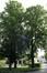 Marronnier commun – Jette, Parc de la clinique Sans Souci, Avenue de l'Exposition Universelle, 218 –  18 Juin 2019