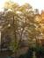 Tilleul à larges feuilles – Ixelles, Rue Washington, 85 –  03 Septembre 2019