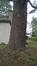 Cèdre bleu de l'Atlas – Uccle, Avenue du Prince d'Orange, 231 –  04 Février 2020