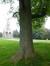 Caryer à folioles cordées – Bruxelles, Parc public de Laeken –  03 Octobre 2014