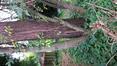 Pin sylvestre – Uccle, Avenue Houzeau, 28 –  27 Octobre 2020