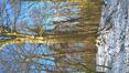 Hêtre d'Europe – Bruxelles, Bois de la Cambre –  11 Février 2021