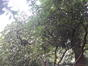 Rhododendron pontique – Watermael-Boitsfort, Parc de Jolymont, Rue Middelbourg, 70 –  26 Juin 2020