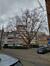 Platane à feuille d'érable – Woluwé-Saint-Pierre, Rue du Duc –  25 Février 2021