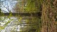 Hêtre d'Europe – Bruxelles, Bois de la Cambre –  20 Avril 2021