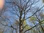 Hêtre pourpre – Uccle, Parc de Wolvendael –  23 Avril 2021