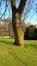 Tulipier de Virginie – Bruxelles, Parc Léopold –  01 Janvier 1996