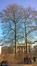 Gewone plataan – Brussel, Leopoldpark –  29 February 2016