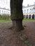 Frêne à feuilles étroites – Bruxelles, Jardins de l'Hospice Pachéco, parc privé –  24 Février 2018