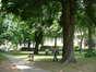Witte paardenkastanje – Brussel, Park van het IBM Pensioenfonds, Geuzenplein –  21 Mei 2002