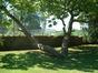 Catalpa chavanon – Bruxelles, Université Libre de Bruxelles - Solbosch, parc –  15 Juillet 2003