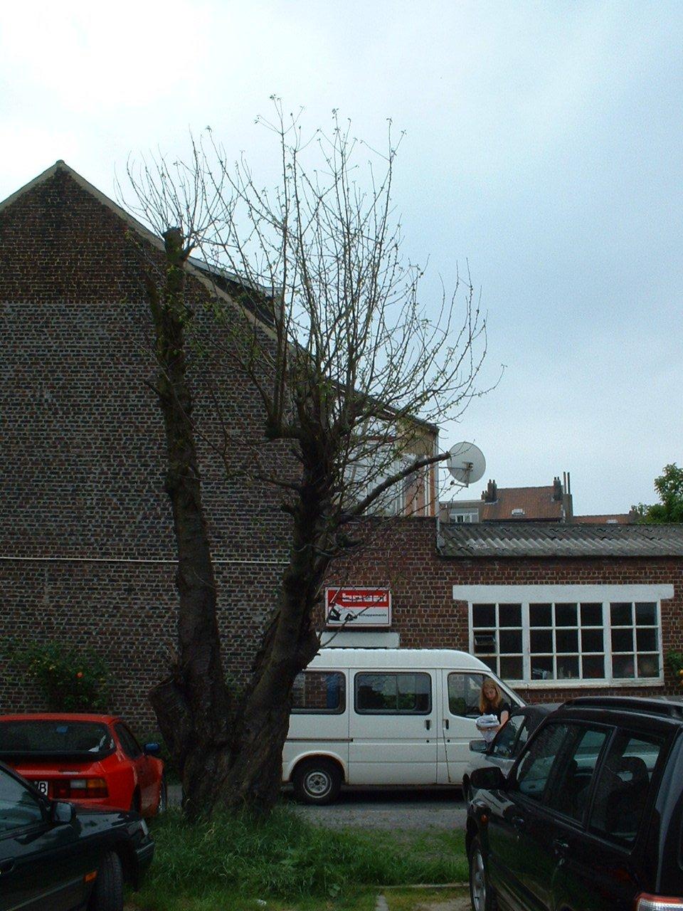 Merisier – Evere, Rue Jean-Baptiste Desmeth, 40 –  19 Juin 2002