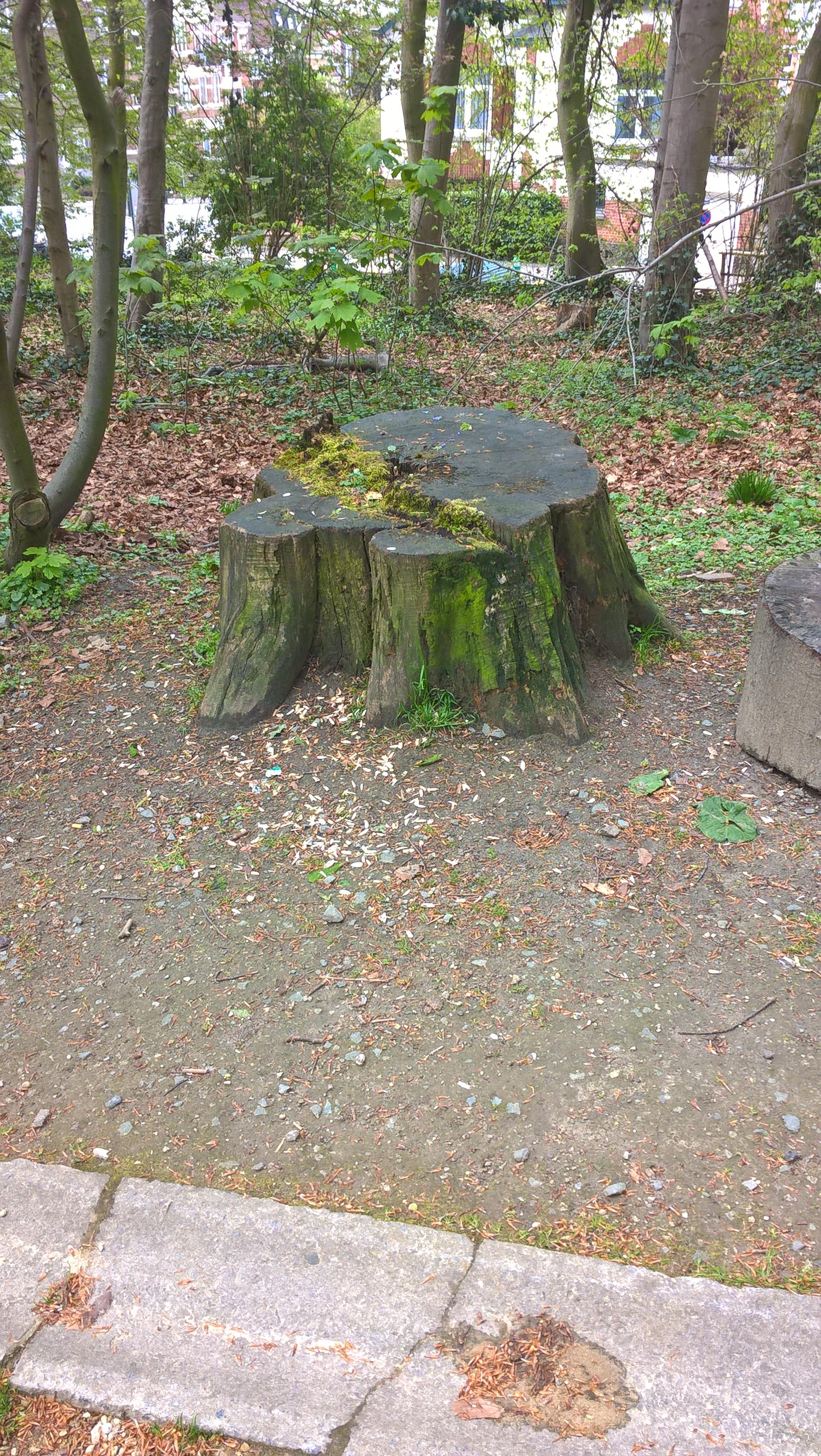 Châtaignier – Forest, Parc Duden –  15 Avril 2016