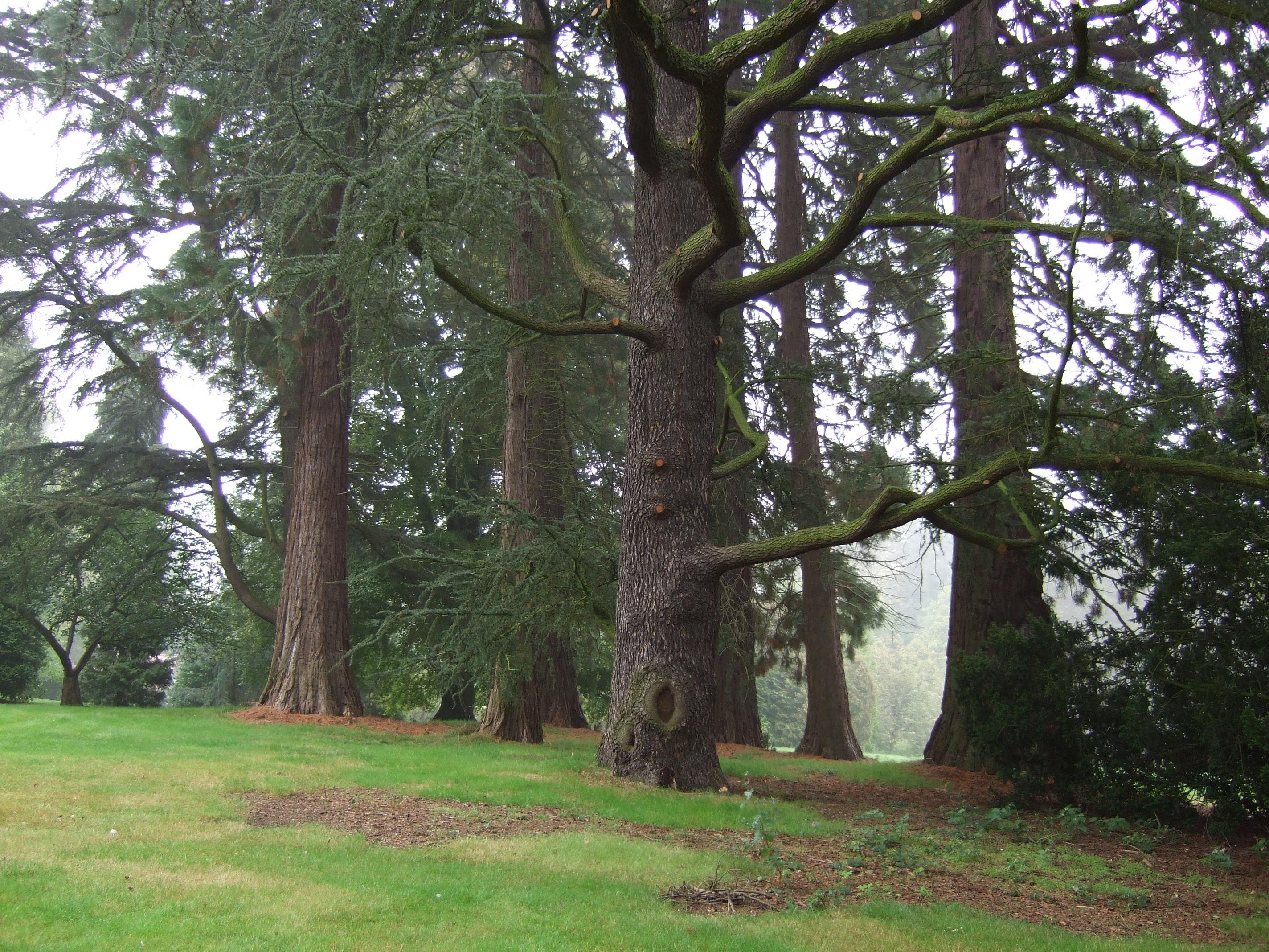 Blauwe ceder – Jette, Titecapark, Dieleghemdreef, 79 –  08 Oktober 2007