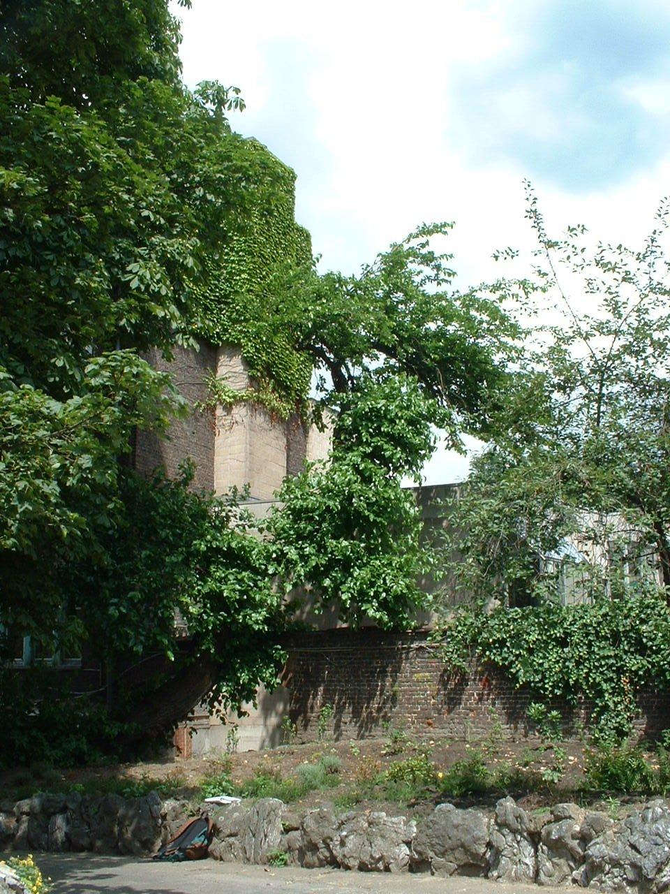 Mûrier noir – Schaerbeek, Rue Gallait, 78 –  12 Juillet 2002
