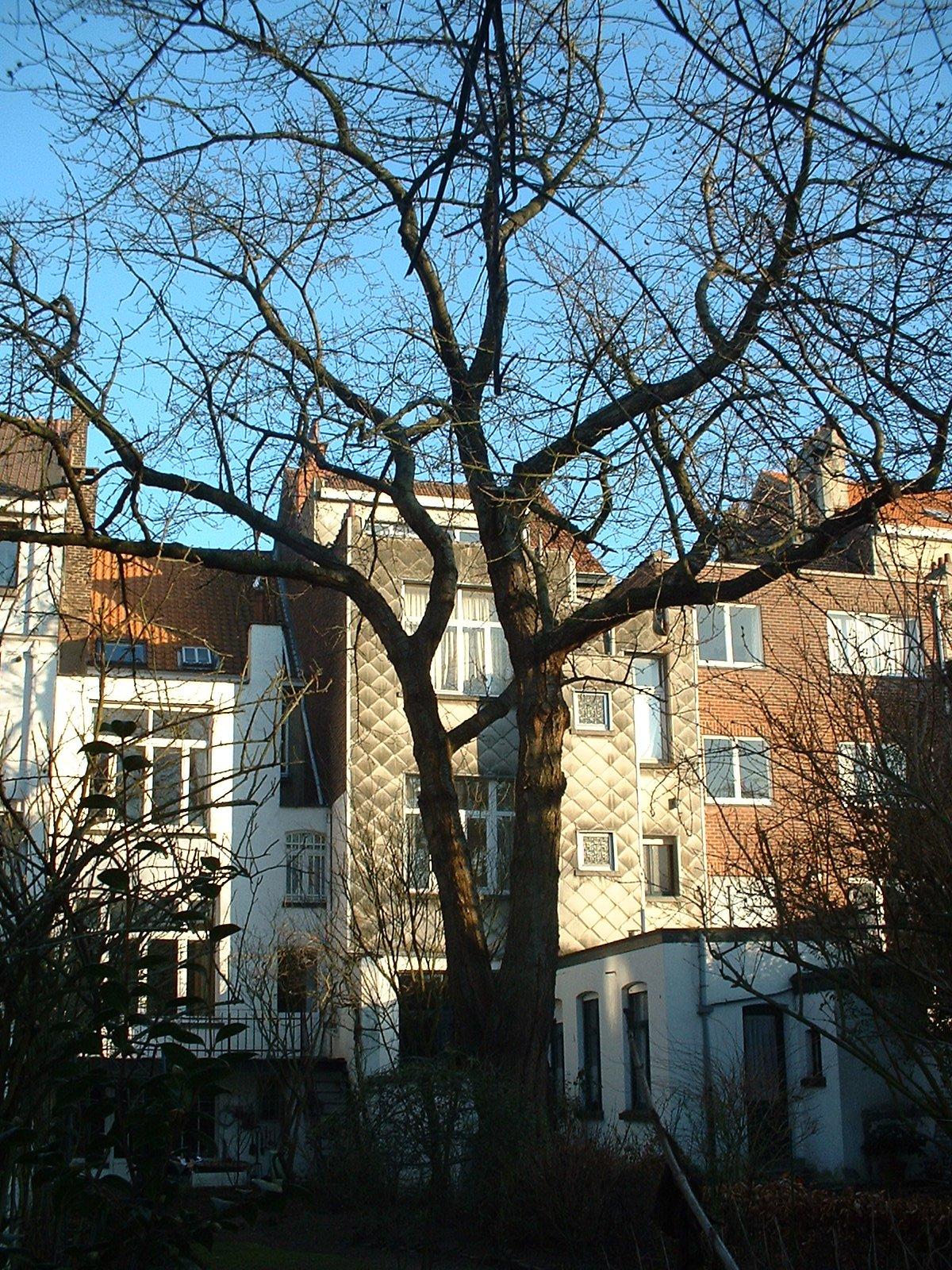 Merisier – Schaerbeek, Avenue Milcamps, 68 –  20 Février 2003