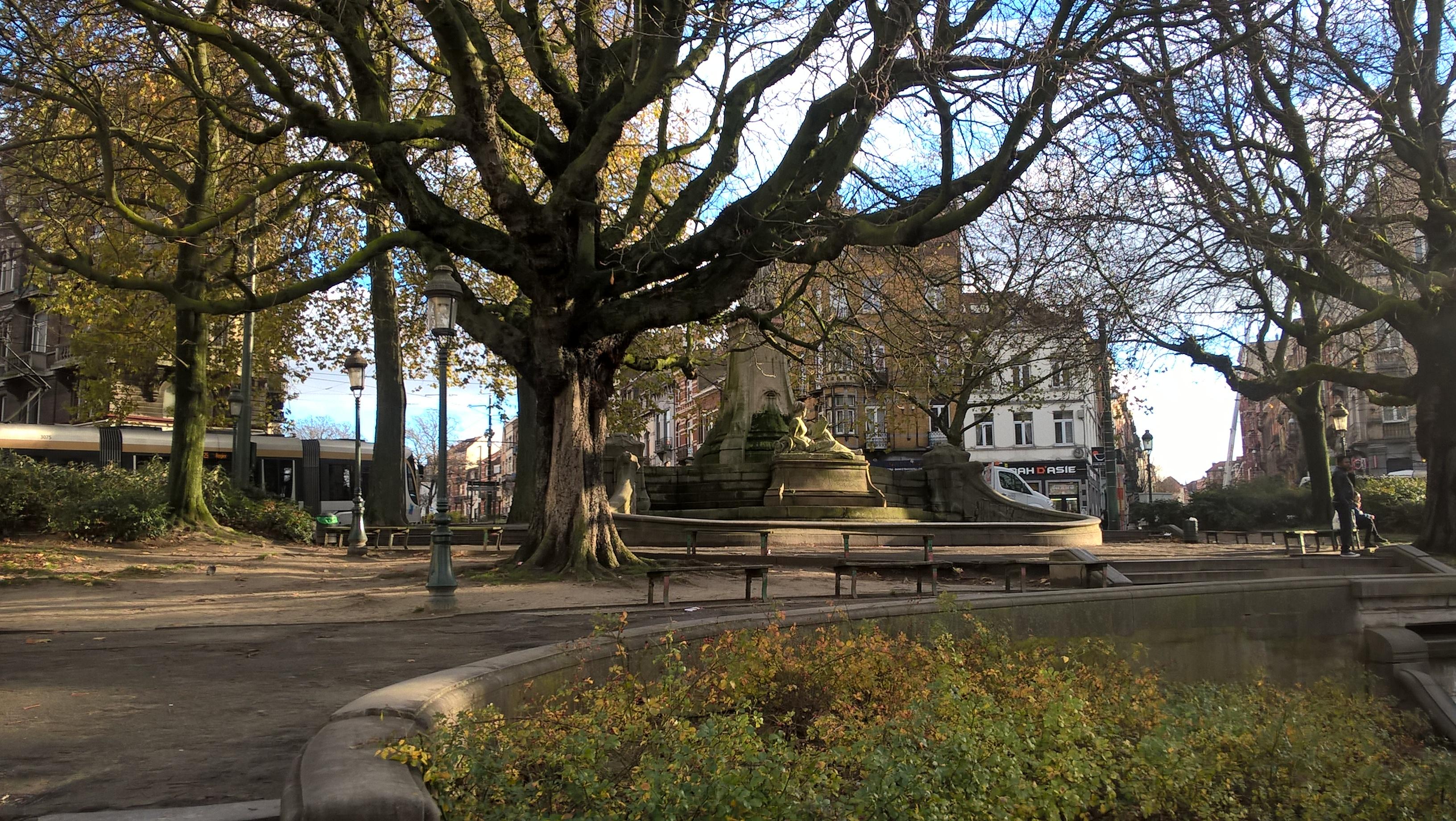Marronnier commun – Schaerbeek, Place des Bienfaiteurs, Place des Bienfaiteurs –  28 Novembre 2017