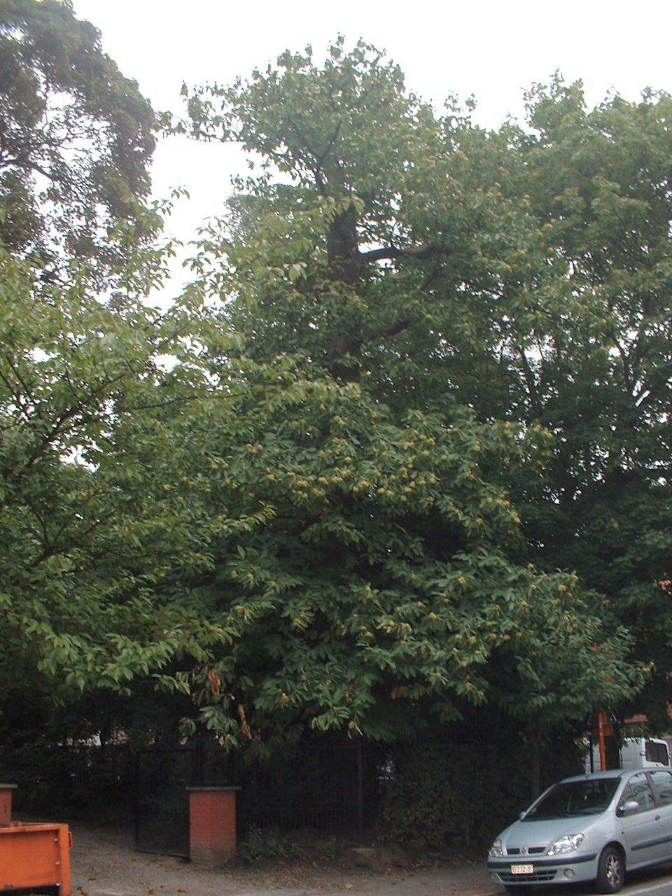 Châtaignier – Auderghem, Avenue Docteur Edmond Cordier, 1 –  05 Octobre 2005