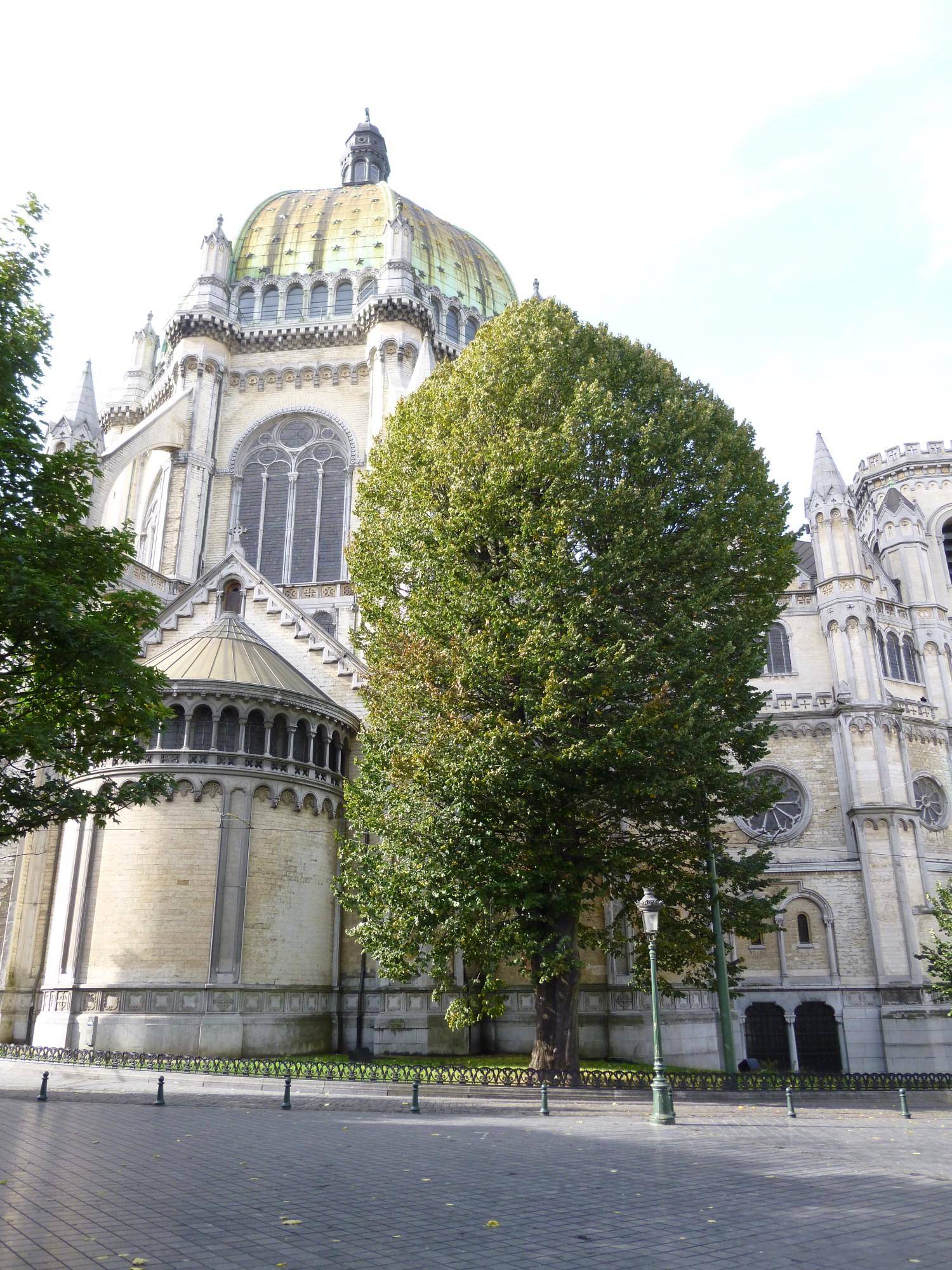 Tilleul argenté – Schaerbeek, Place de la Reine –  16 Octobre 2012