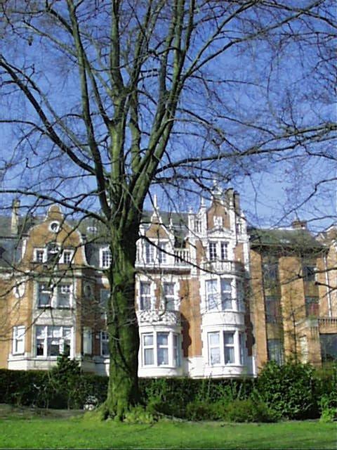 Hêtre pourpre – Schaerbeek, Square Vergote, Square Vergote, face 41 –  05 Avril 2002