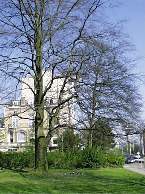 Hêtre pourpre – Schaerbeek, Square Vergote, Square Vergote, face 45 –  05 Avril 2002