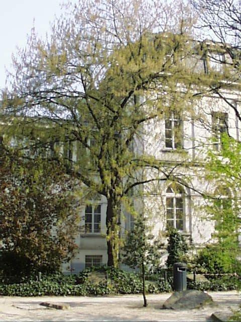 Erable à feuilles de frêne – Saint-Josse-Ten-Noode, Square Henri Frick, Square Henri Frick –  12 Avril 2002