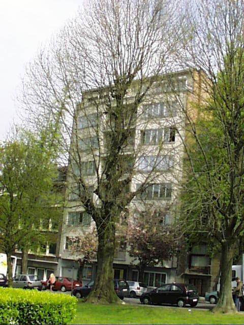 Frêne commun – Schaerbeek, Avenue Huart Hamoir et Square Riga, Avenue Huart Hamoir, 44 –  22 Avril 2002