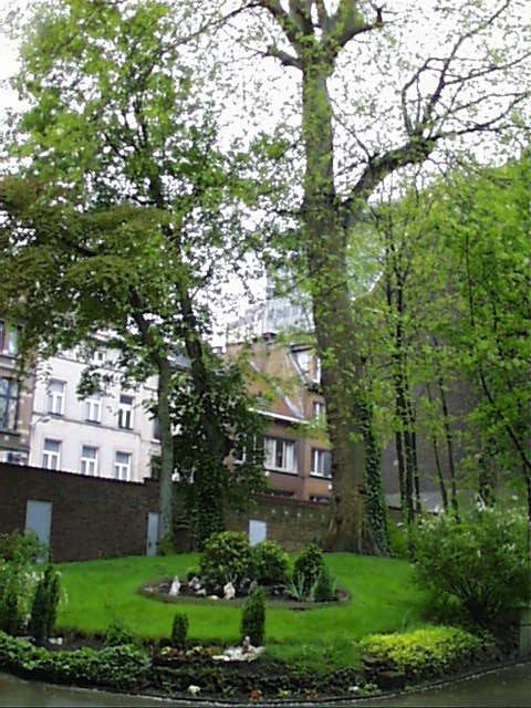 Platane à feuille d'érable – Saint-Josse-Ten-Noode, Rue Royale, 165 –  02 Mai 2002
