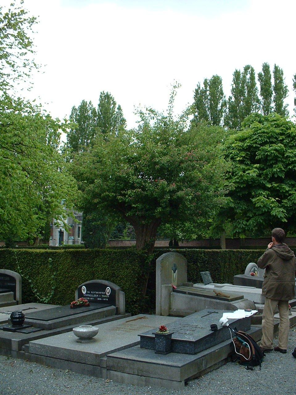 Aubépine à deux styles – Bruxelles, Cimetière de Neder-over-Heembeek, Rue François Vekemans –  06 Mai 2002