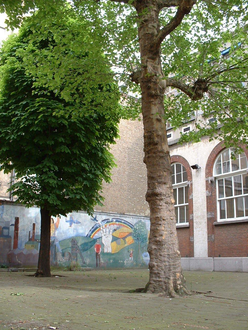 Platane à feuille d'érable – Bruxelles, Boulevard Maurice Lemonnier, 110 –  15 Mai 2002