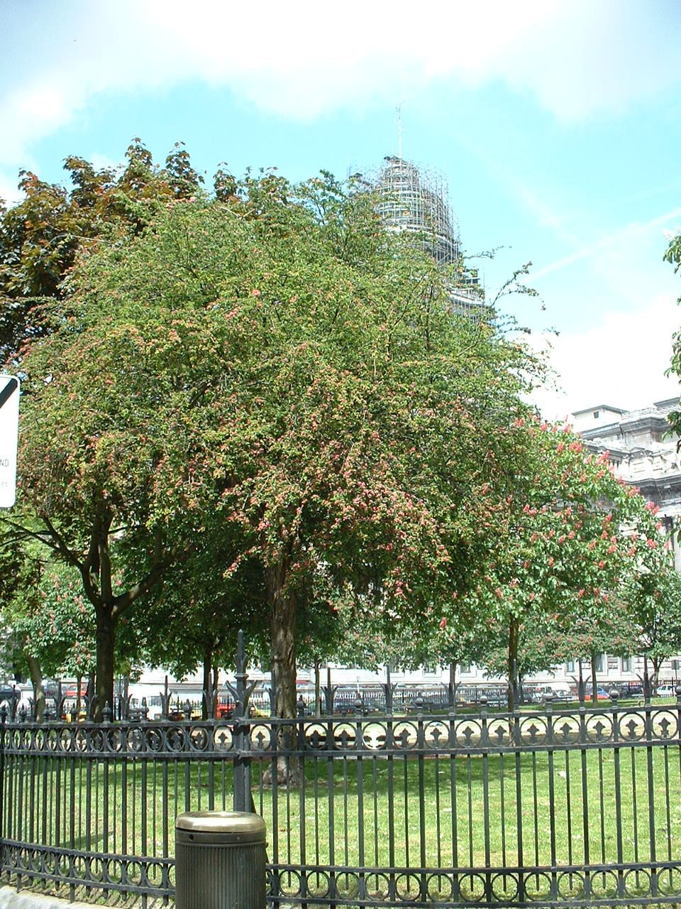 Aubépine à deux styles – Bruxelles, Place Jean Jacobs, Place Jean Jacobs –  15 Mai 2002
